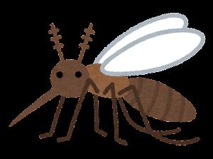 蚊の一生のイラスト(成虫)