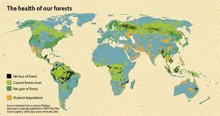 Hutan di Dunia