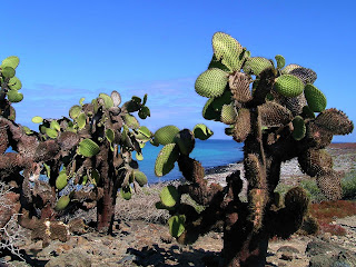 Changes in vegetation in Galapagos