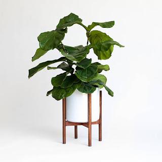 modern minimalist planter