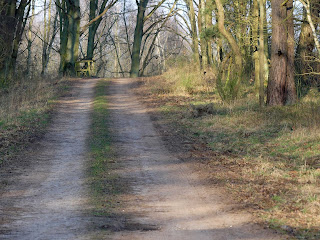 Wald, Strasse