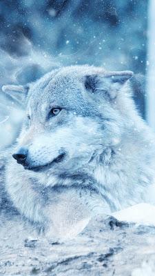 خلفيات ايفون ذئب