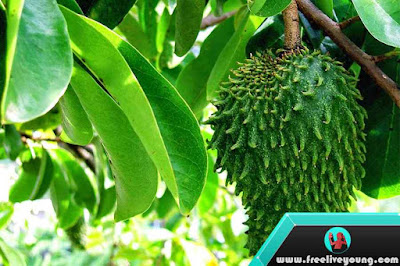 8 Benefits of Soursop Fruit For Body Health