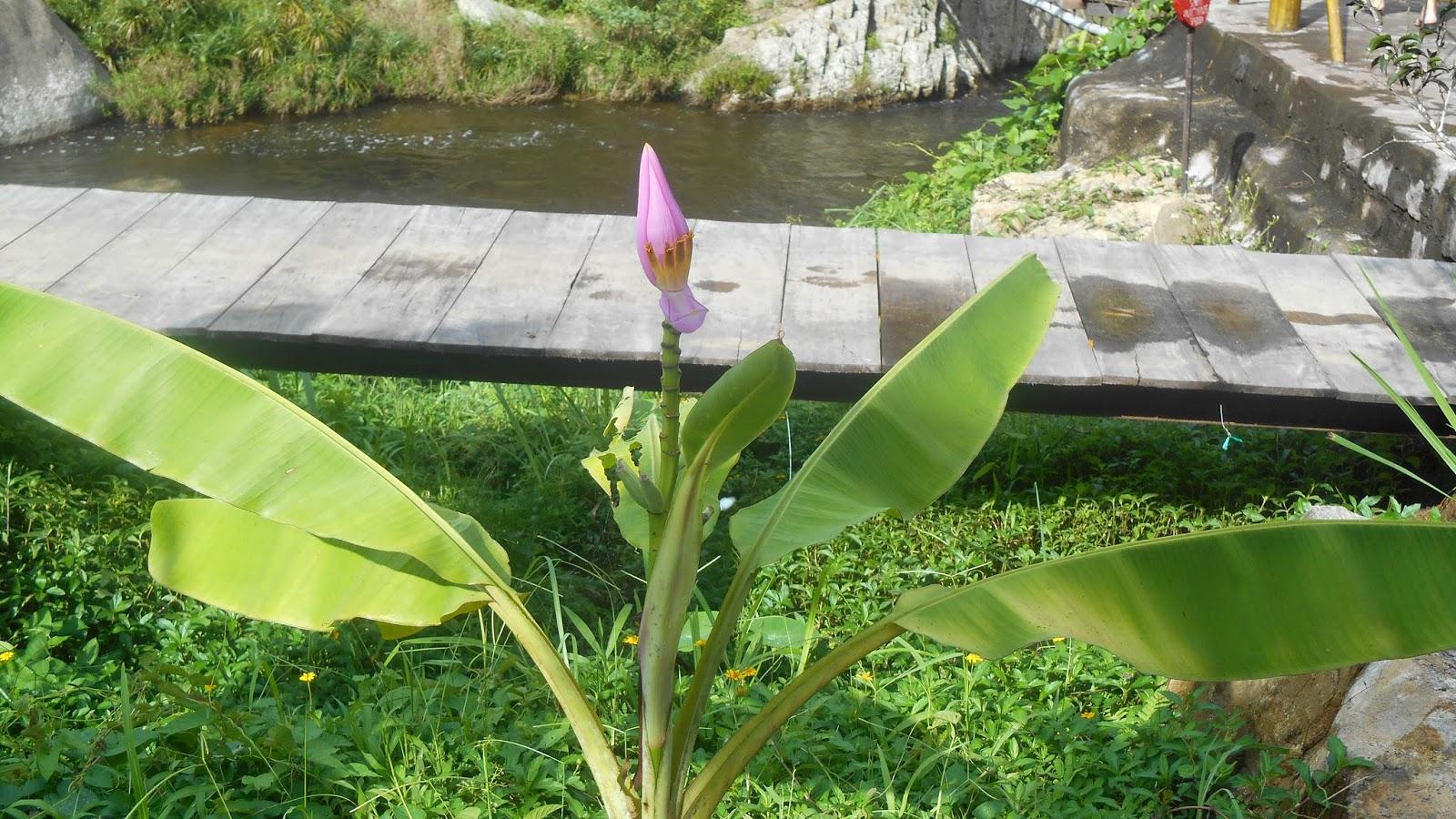 цветок у мостика