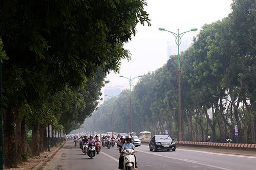 Hàng cây xanh trên đường Phạm Văn Đồng sẽ phải di dời đến vườn ươm