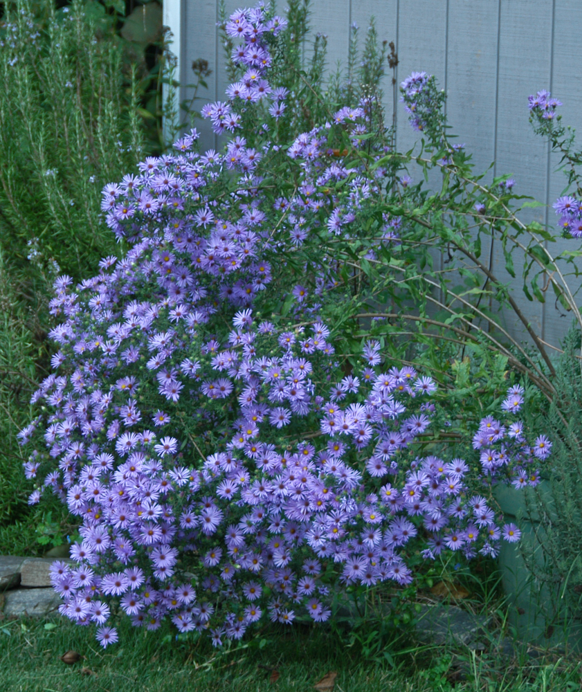 I Want To Plant A Flowering Perennial Garden This Spring