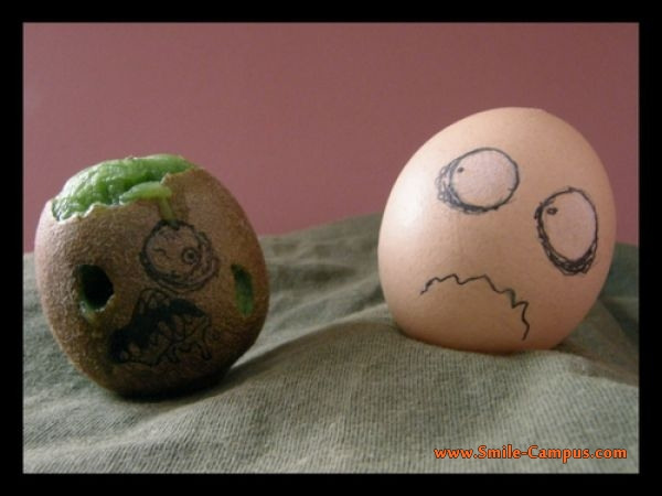 Life of Eggs - Funny Pictures