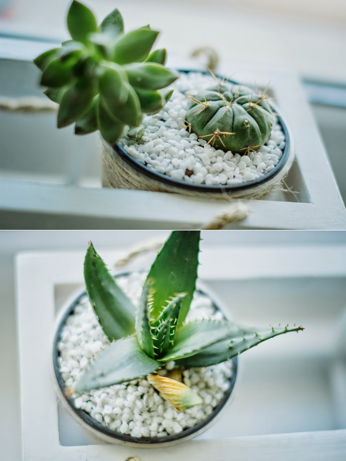 DIY cups for succulent or other plants - my small window garden is ...