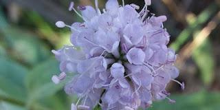 http://www.efeverde.com/noticias/flora-sierra-nevada/
