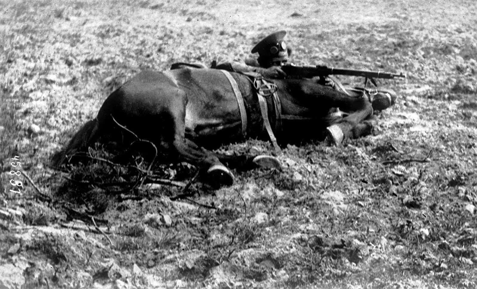 A Russian Cossack, in firing position, behind his horse, 1915.