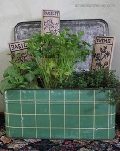 bekas kotak roti jadi pot tanaman herbal