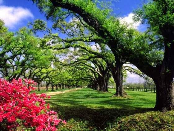 Parque en primavera