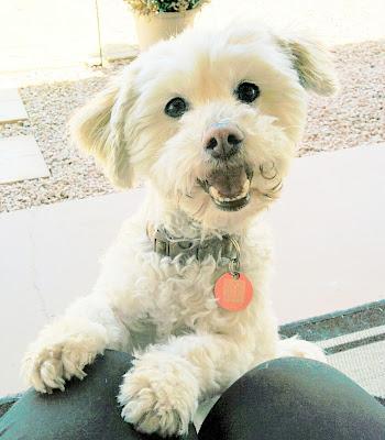 Dogs, Buying a dog, Adopting a dog, Pet adoption, Getting a pet