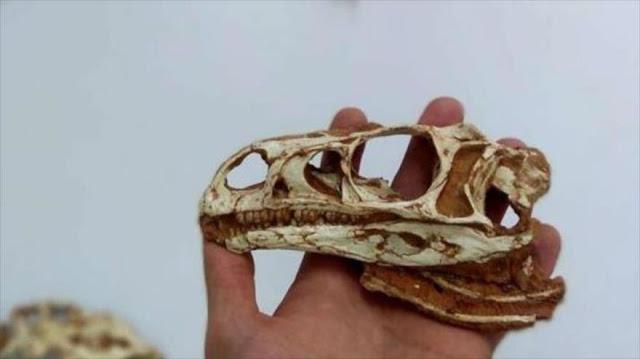 Hallan restos de dinosaurio de cuello largo más antiguo en Brasil