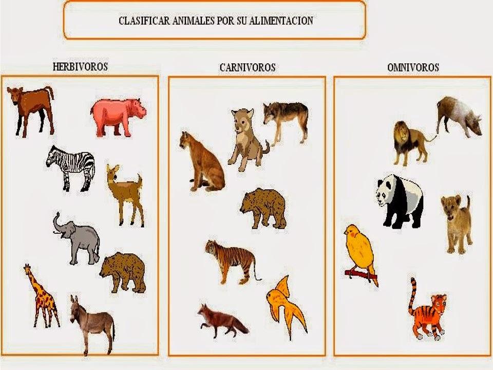 Imagenes De Animales Carnivoros Para Colorear: Dibujos De Animales Carnivoros Para Nios Dibujos De