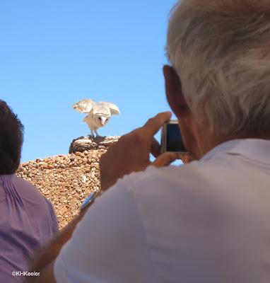 Alice Springs Desert Park bird show