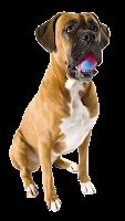 Cachorro com bolinha png