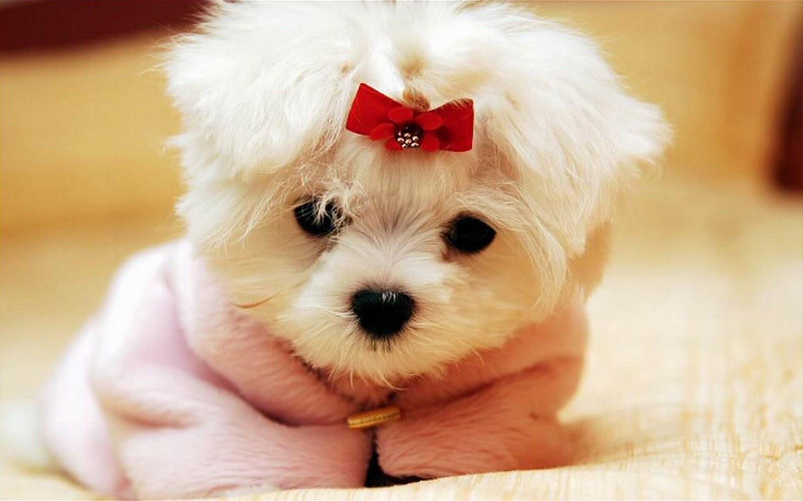 Thư viện đồ họa » Hình ảnh » Hình ảnh Động vật » Hình ảnh chó con dễ thương ngộ nghĩnh nhất