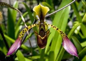 2. Anggrek  Tanaman yang satu ini adalah bunga yang cukup disukai oleh seluruhnya kelompok.