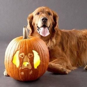 The Jungle Store: Pumpkin Carving Ideas - Pets On Pumpkins