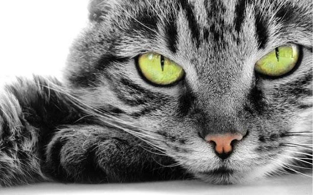 Ini Fakta Tentang Mata Kucing Yang Membuat Kita Semakin Mengagungkan Allah