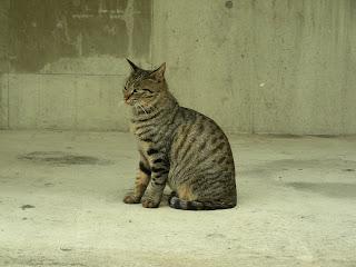 綺麗なキジトラ猫に再会したい…