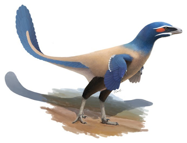New feathered dinosaur species named after Alberta paleontologist