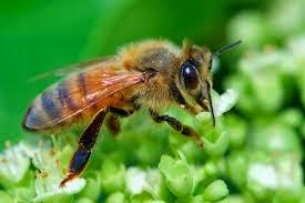 mật ong có màu gì
