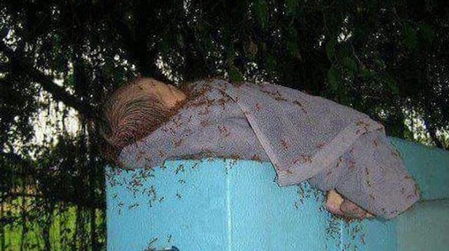 bayi dikerubungi semut merah