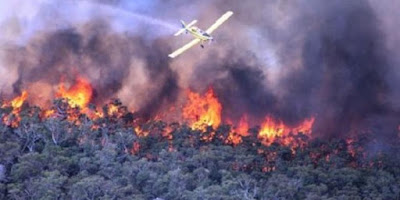 Polda Riau Sudah Tetapkan Sebanyak 85 Orang Tersangka Pembakar Hutan dan Lahan - Commando