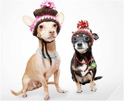 103 tutoriales ropa y accesorios para mascotas tejida a crochet