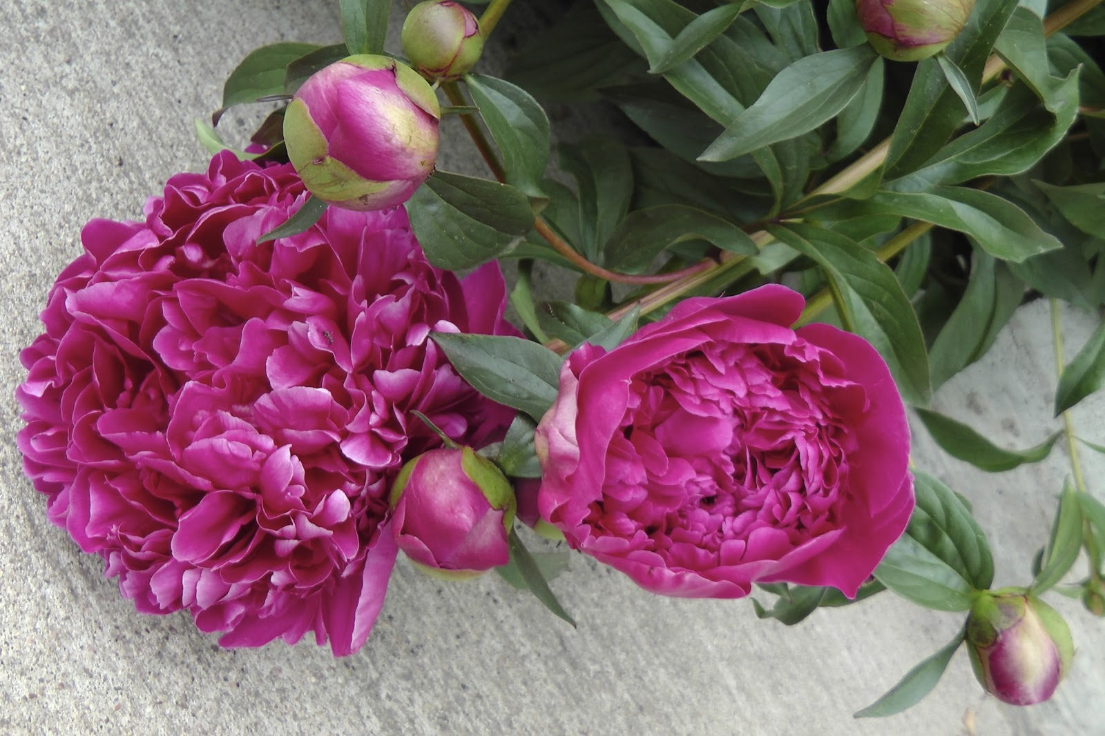 Aus Der Küche Und Dem Garten Blumen Oder Gemüse Garten