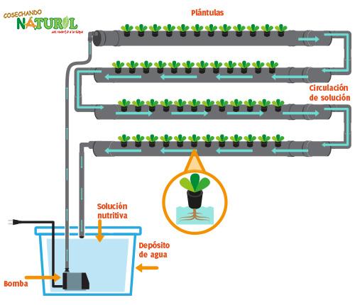 Gu a t cnica del cultivo hidrop nico jardines verticales for Sistema riego jardin vertical