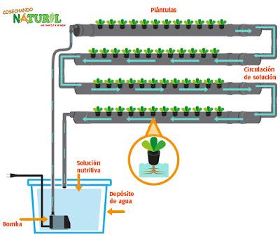 cultivo hidroponico jardines verticales