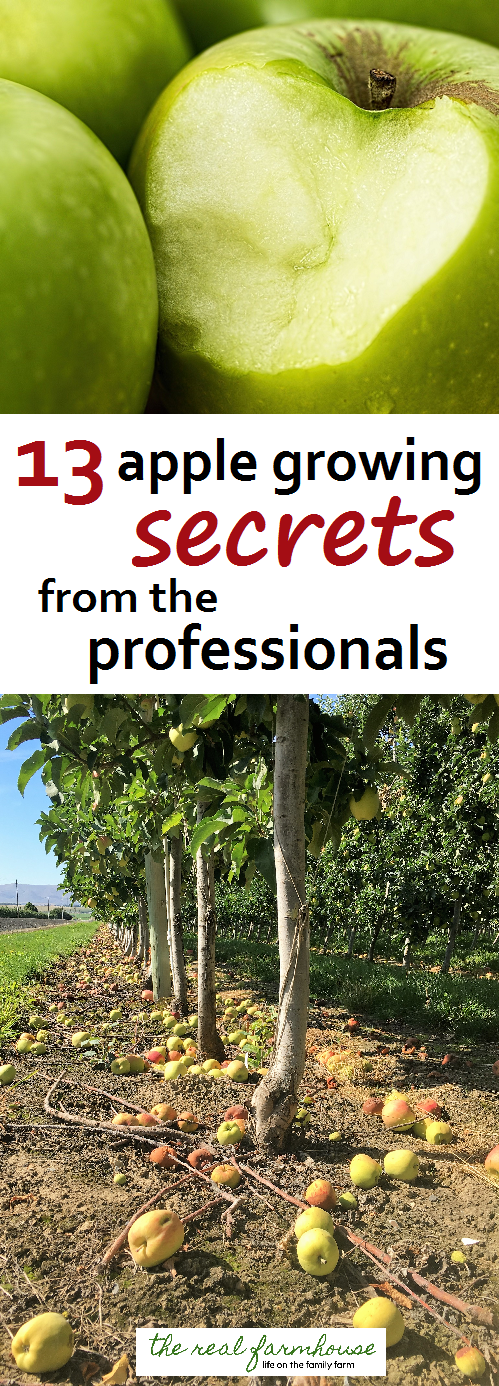 Different Views of People How to Grow Apples, Growing ...