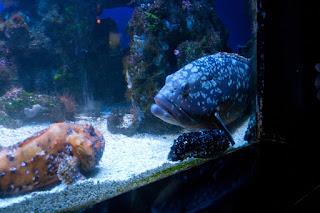 Oceanographic Museum, MONACO, океанографический музей, Монако