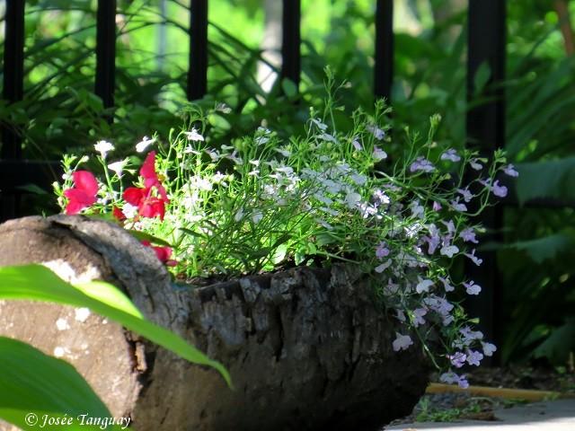 fleurs dans un tronc