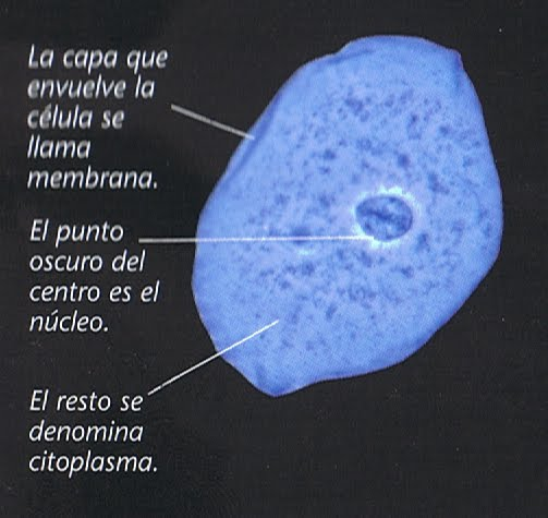 Laboratory Epithelial Cells From The Mouth