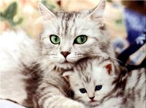 Foto de una gta abrazando a su gatito