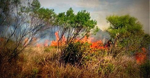 #Ahora Incendio de pastizales en Ciudad Universitaria