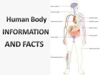 Human Body Amazing Facts and Information