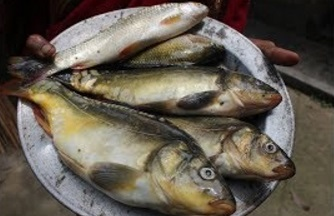 Village Food   Full fish sauce curry