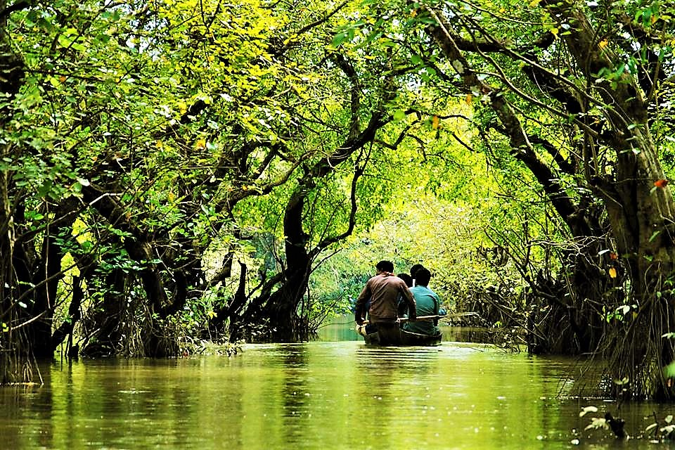 ratargul swamp forest of bangladesh