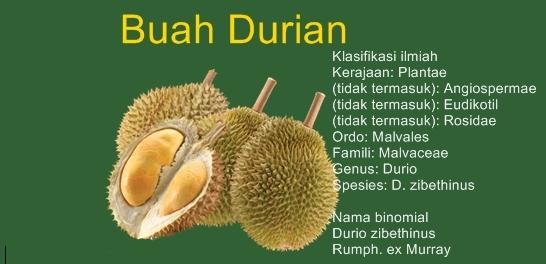 Manfaat Buah Durian Bagi Kesehatan Dan Kandungan Nutrisinya