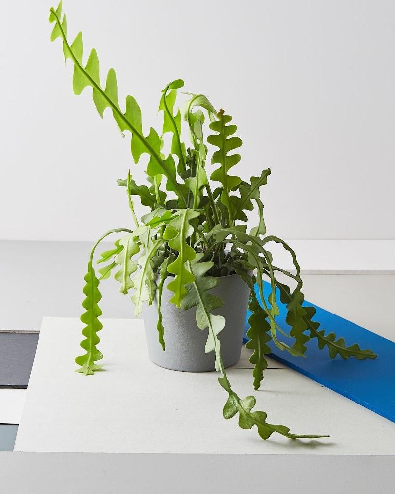 fPdecor_Zig-Zag-Cactus