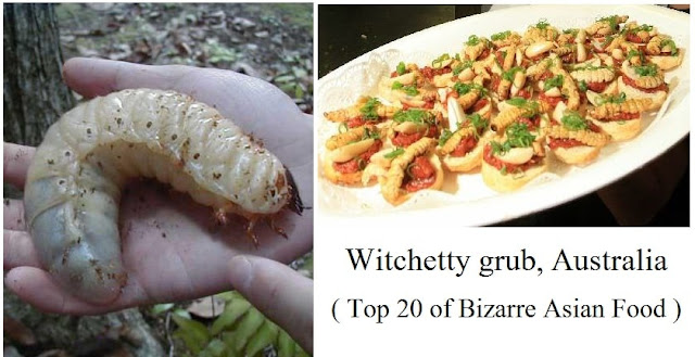 Witchetty Grub, Australia- top 20 of bizarre asian food