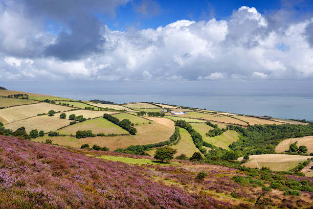Porlock Common on the coast of Exmoor National Park by Martyn Ferry Photography