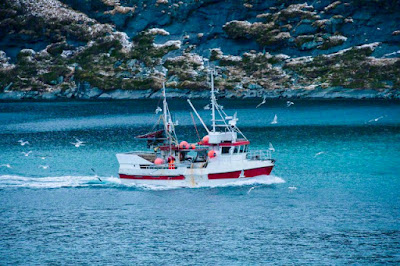 Fishing boat on sea, Reine, Norway