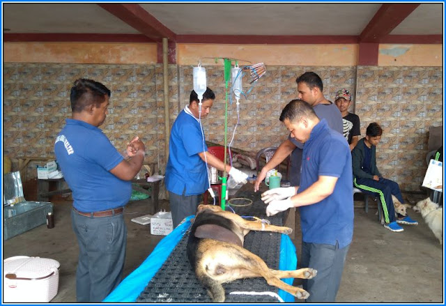 Anti Rabies and Animal Birth Control for Dog Camp held in Mungpoo