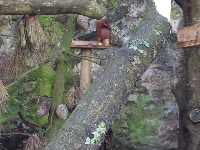 Red Squirrel Paradise Park